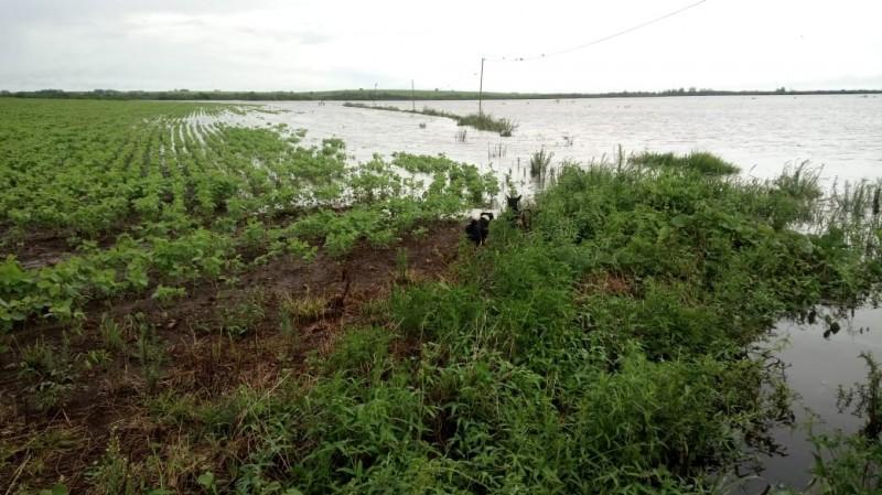 RS: Chuvas recentes podem comprometer produtividade da soja