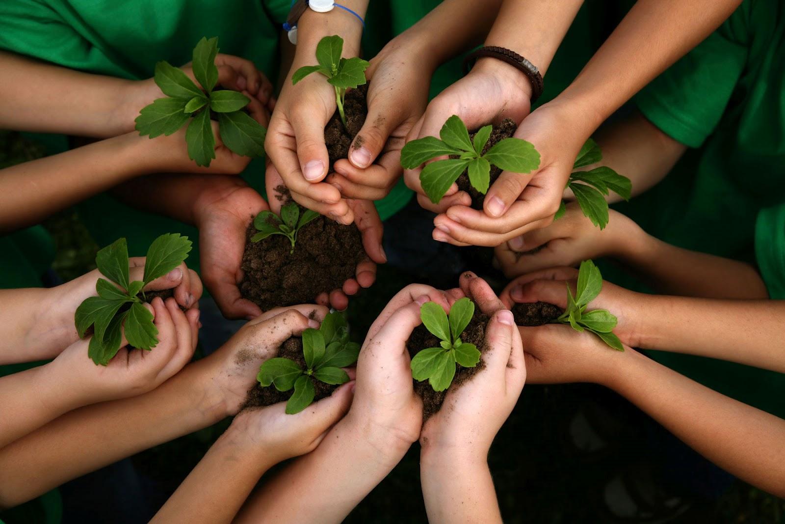 RS: Comunidade judaica comemora ano novo das árvores