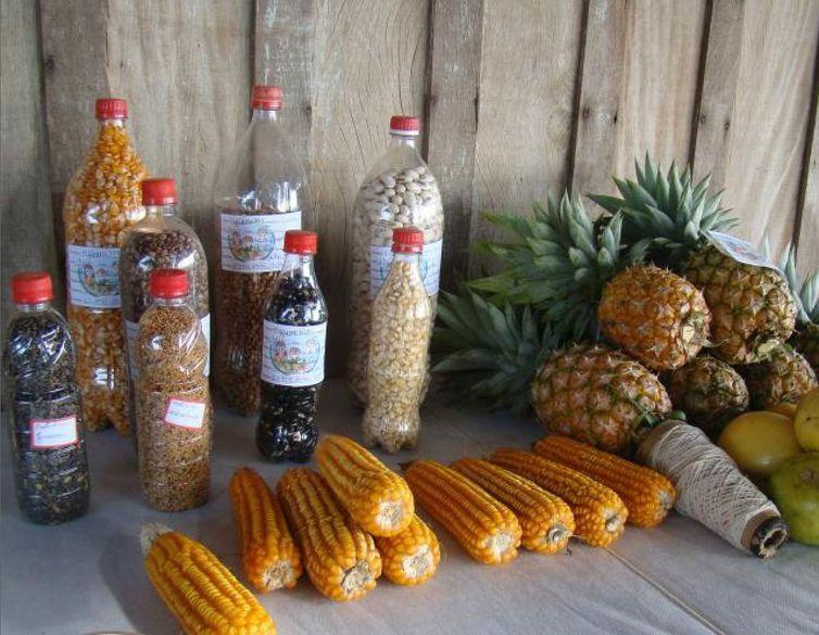 Agricultores familiares debatem importância da semente crioula