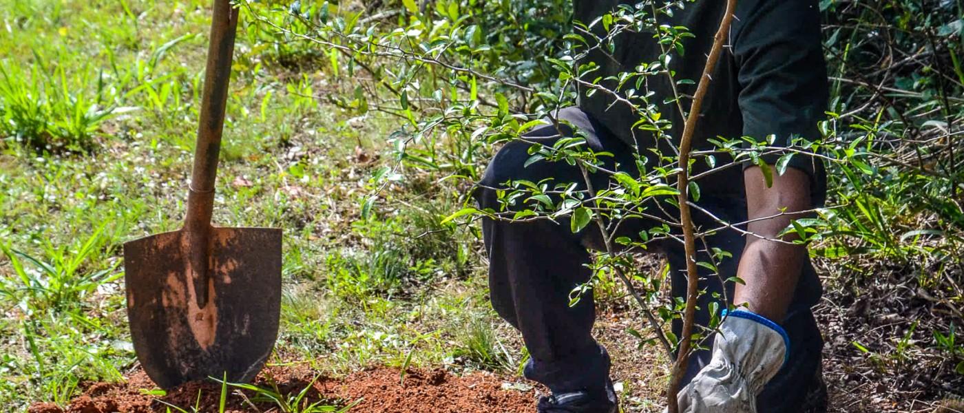 Porto Alegre: Praça da zona Sul recebe plantio de 34 árvores
