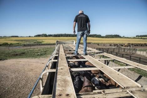 RS: Exportação de gado vivo avança e mira novos mercados