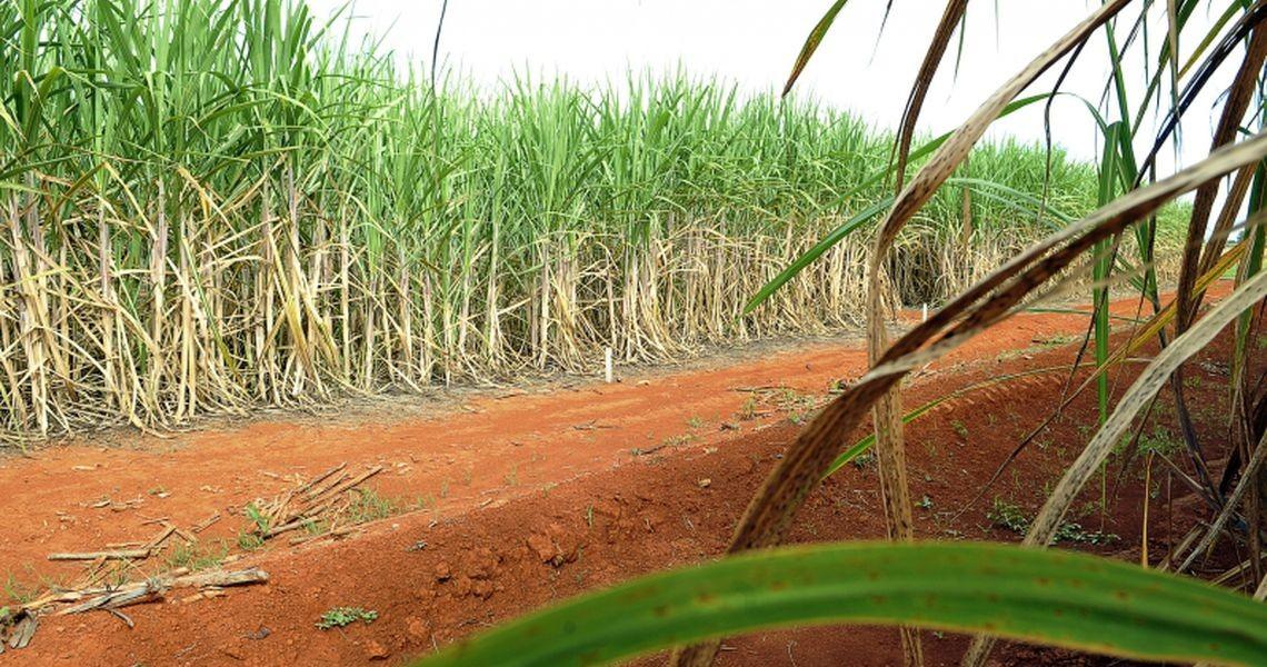 Etanol deve alcançar recorde de produção com 33,14 bilhões de litros
