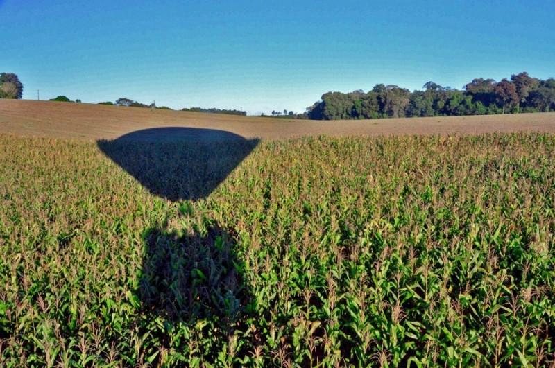 RS: Colheita do milho atinge 87% da área cultivada e produção deve ser 25% maior que safra anterior