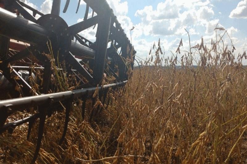RS: Cultivo da soja tem colheita finalizada no Estado, informa Emater/RS-Ascar