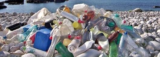 Trashtag: Semana do Meio Ambiente na Unisinos terá evento aberto ao público