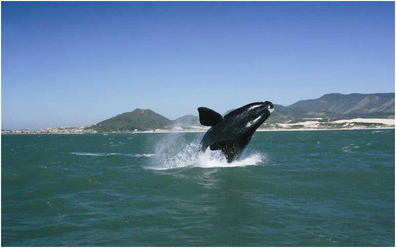 Baleia Franca: TRF4 amplia exigências para liberação de turismo de observação embarcado no litoral sul catarinense