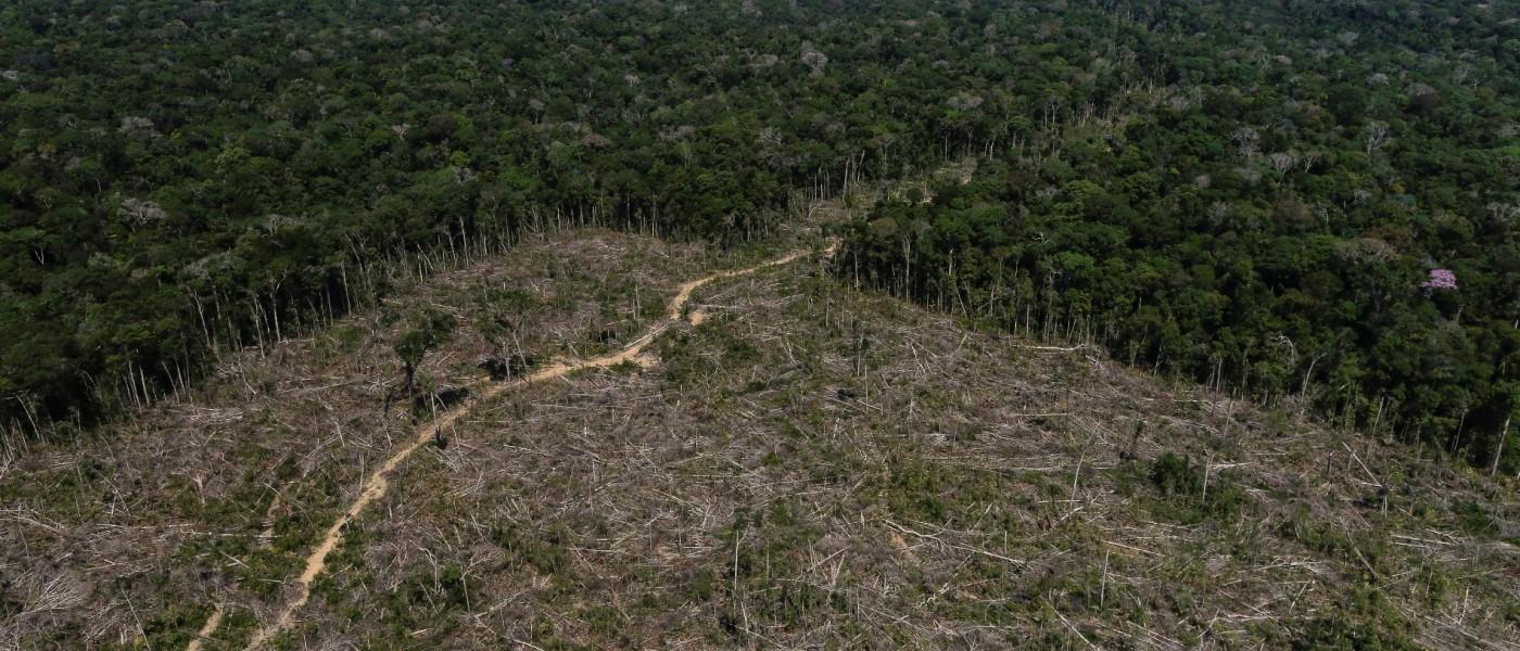 Amazônia perde em média 19 hectares de mata por hora