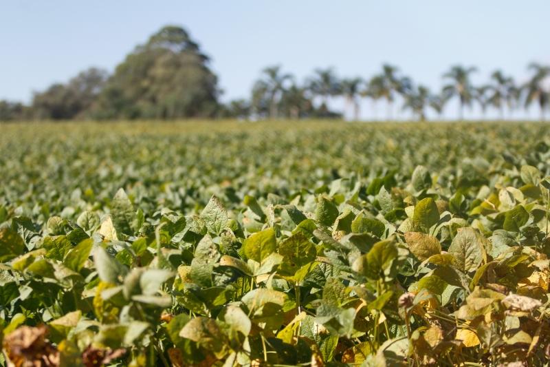 Emater estima colheita recorde na safra de verão