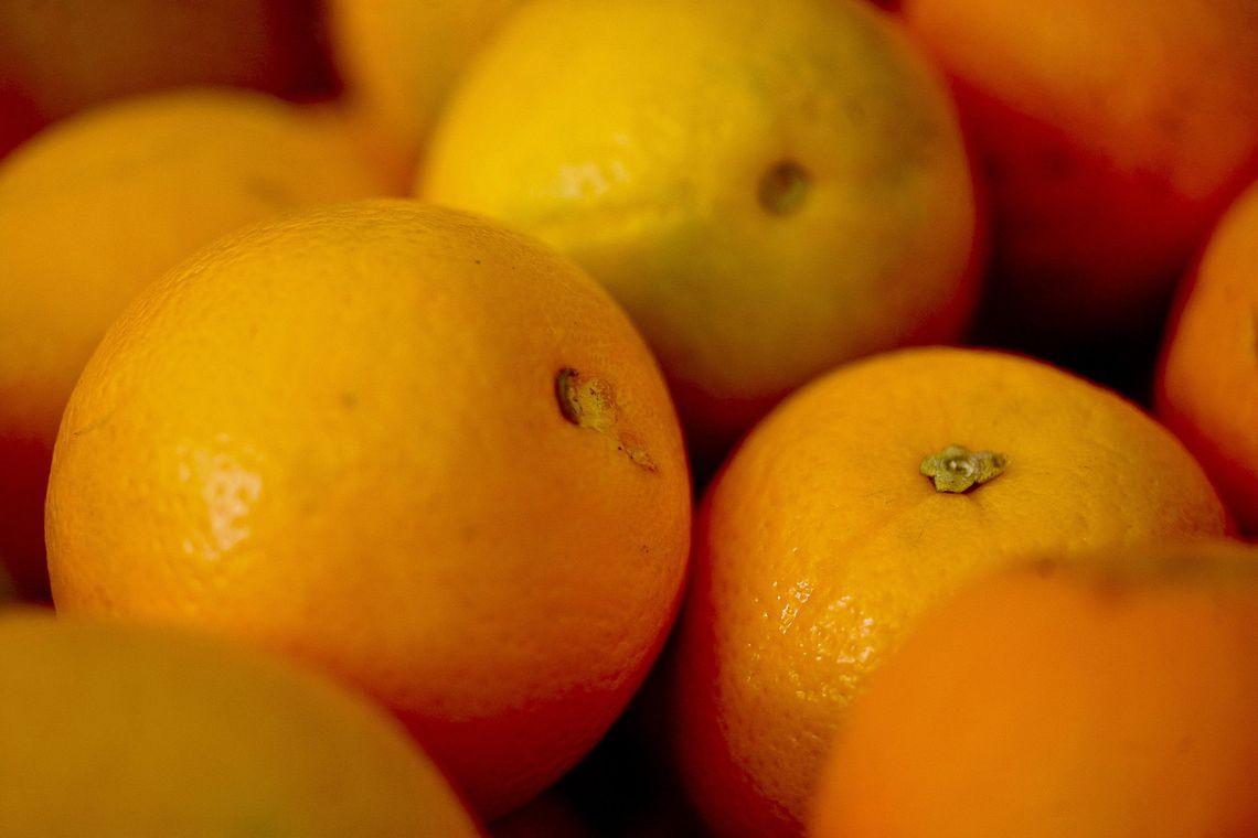 Produtor de laranja do RS tem nova oportunidade de apoio à comercialização