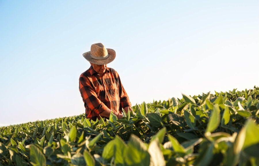 Agronegócio: Índices acumulados em 12 meses registram queda em outubro. Custos de produção foram menores, mas preços pagos ao produtor também diminuíram