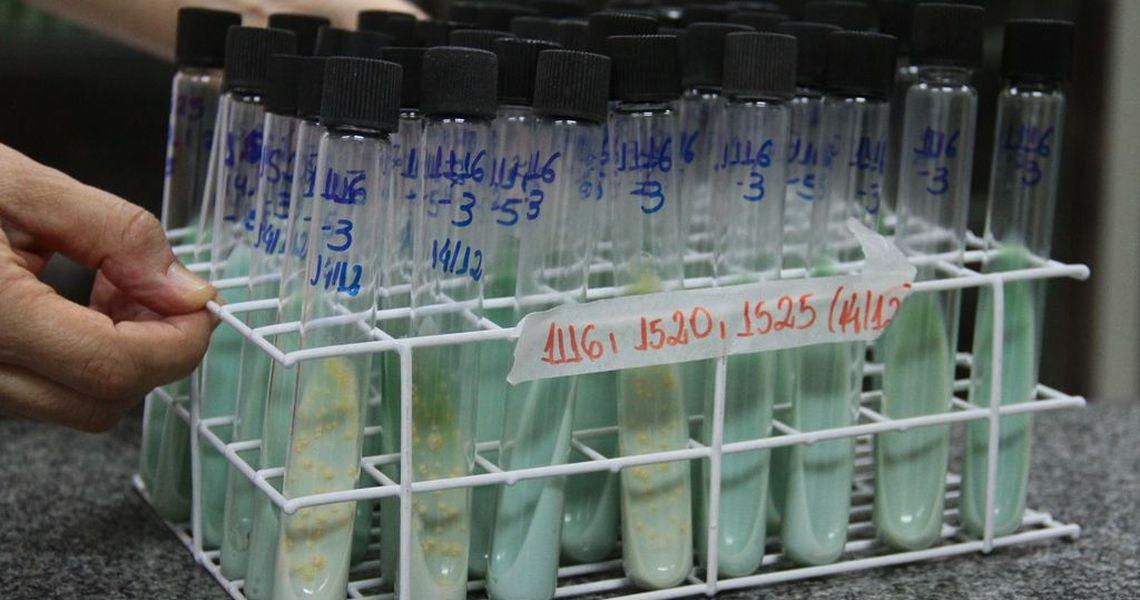 Combate à doença de Chagas terá investimento de US$ 20 milhões