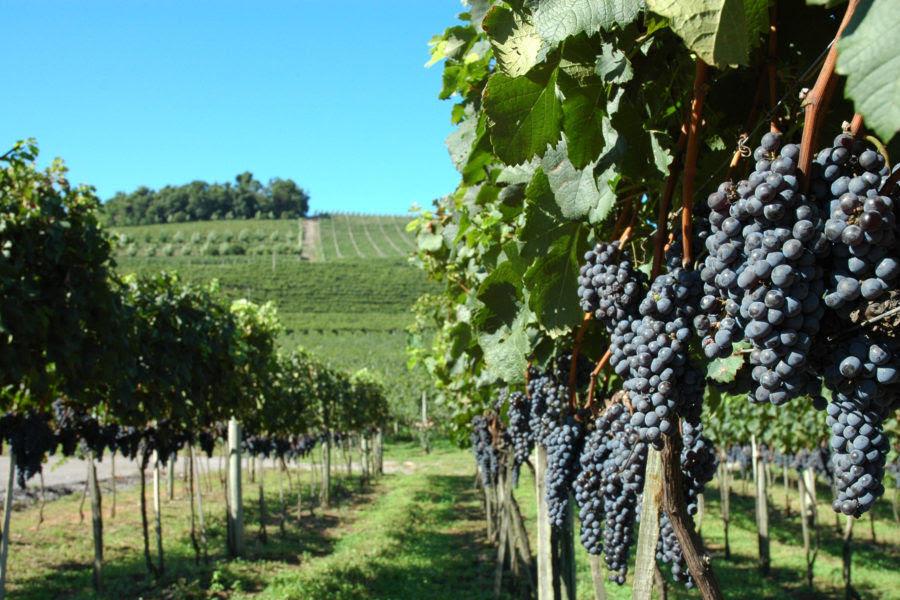 2020: Bento Jazz & Wine Festival movimentará a Serra Gaúcha em março