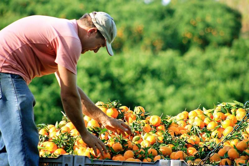 RS: Carência de chuva também afetou produção de citros