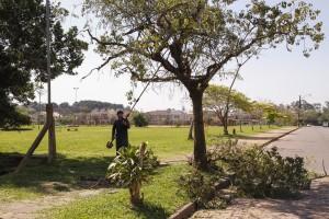 Porto Alegre: Manejo de árvores com risco iminente poderá ser imediato
