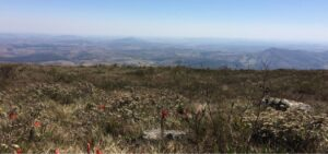 Brasileira ganha prêmio da ONU com estudo sobre mudança climática e bioma do Cerrado; ONU News