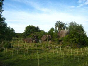 Sem recurso e com regras rígidas, criação de unidades de conservação não avança no Pampa; Sul 21
